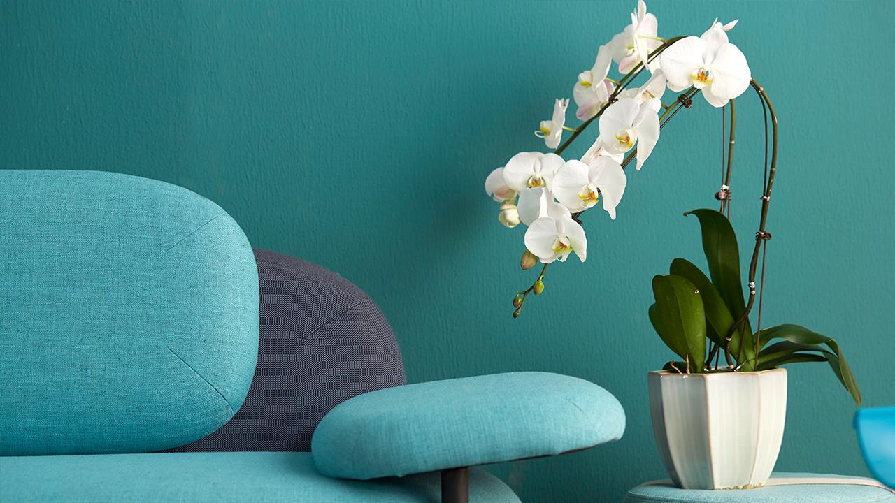 不想让沙发和墙由于相近颜色糊成一片,像这样稍稍动点小心机,一盆干净优雅的植物作点缀再恰当不过。