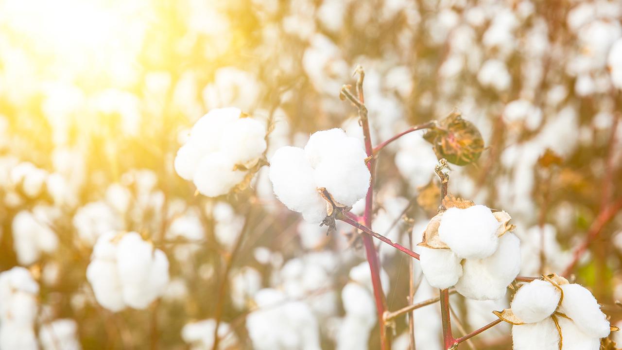 挑剔的触肤体验,从原料开始。棉花的选择是床品是否优质的关键,柔韧并且纤维较长的长绒棉,作为亲肤的床品原料再适宜不过,所以,有眠的原料选用了产于新疆的优质长绒棉,它能捻出更纤细柔韧的纱线,更适合纺织高密度棉织物。