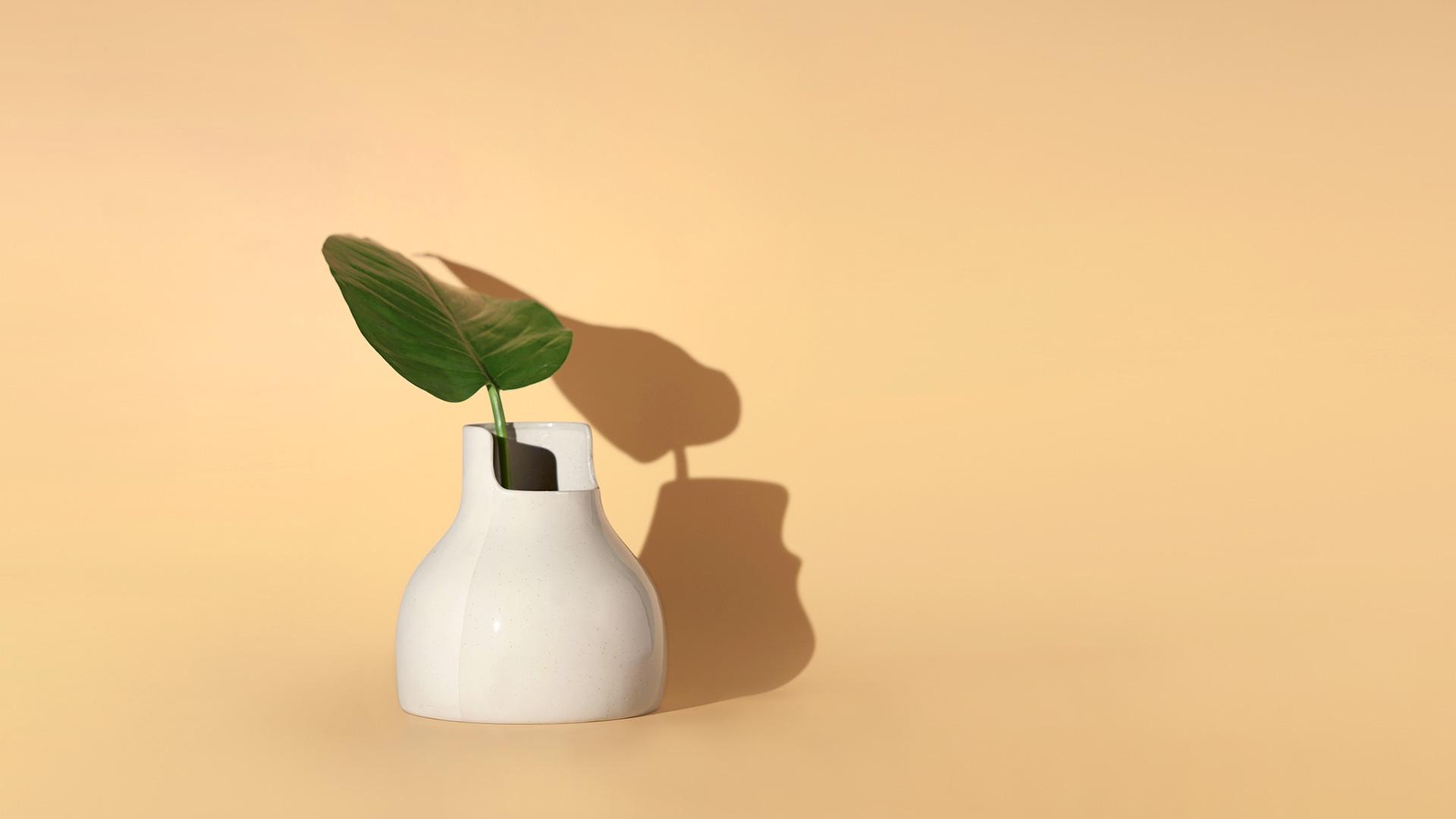 热带翠绿,养成大叶绿萝的茁壮生机。
