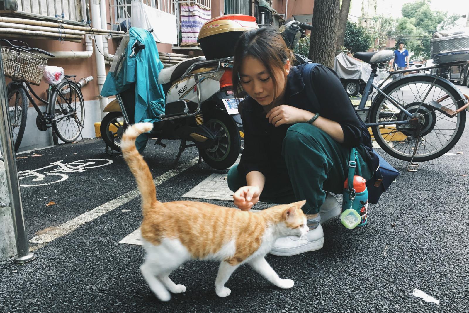 ▲我喜欢猫