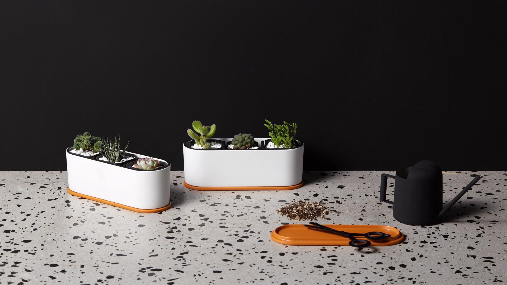 打造一个精致的桌面小花坛