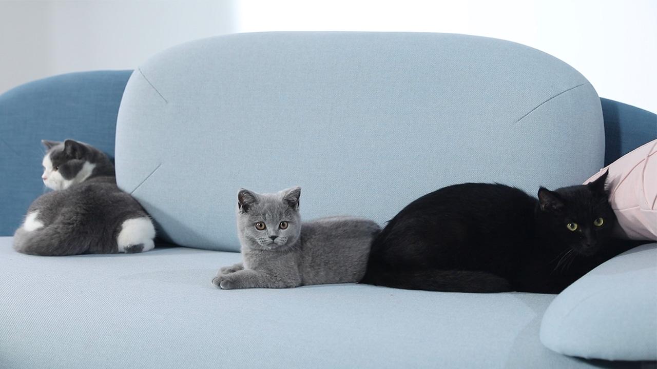 视知 X 造作 | 猫咪趣味实验室,小猫抓周看2018运势