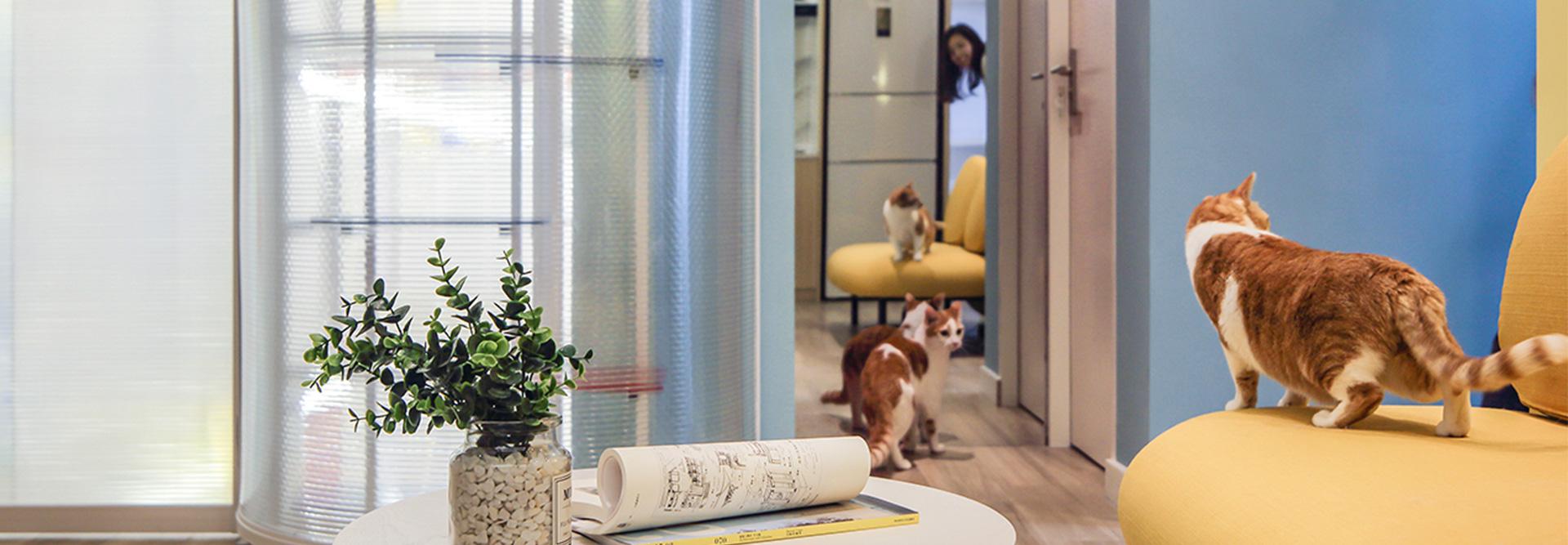 《Wallpaper*卷宗》报道 | 造作猫屋改造引起关注
