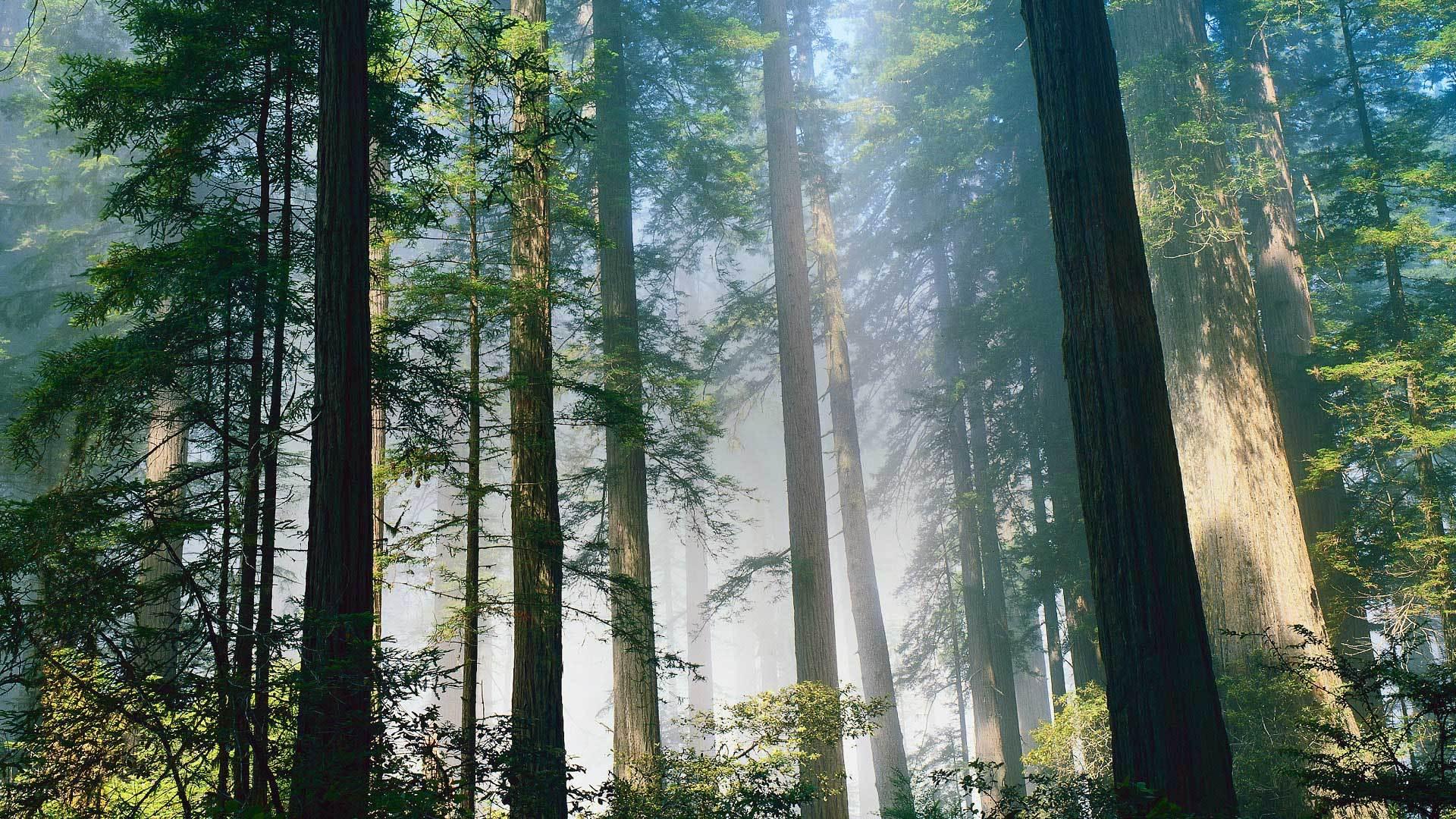 100%木纤维原料,来自山林的清新舒适
