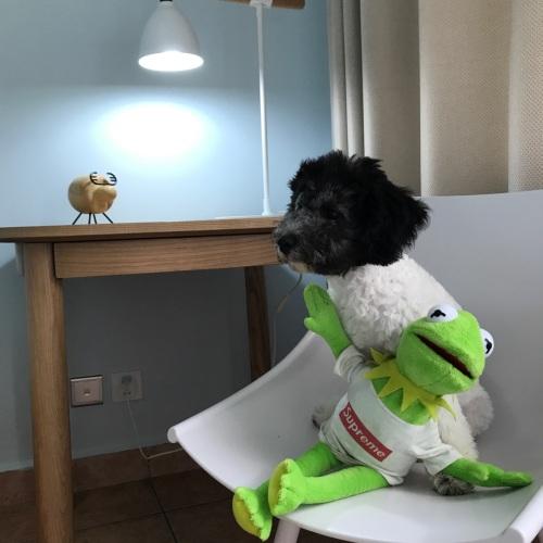 爱吃萝卜的狗狗_null怎么样_5